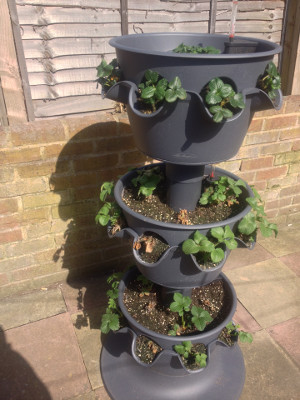 3-tier planter with some weak plants in middle and bottom tiers dying off.