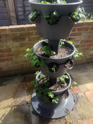 3-tier planter fed and watered, with weak/dead plants removed.